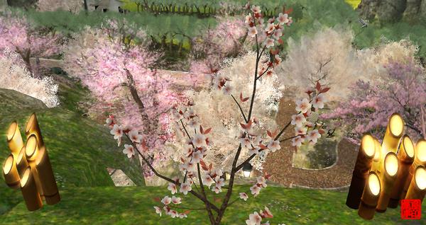 桜の開花宣言(東京)・・・